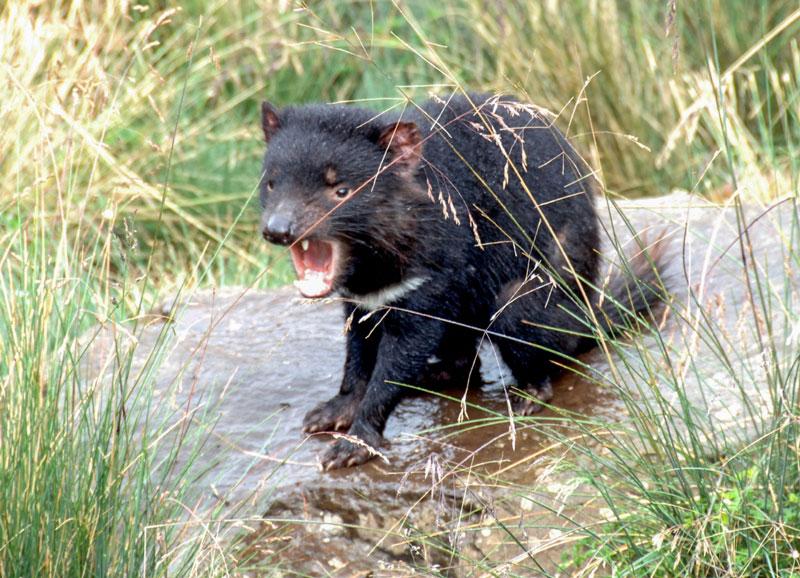 Tasmanien03